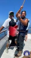 Sea Landing - Coral Sea