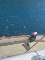 Redondo Beach Sportfishing  - Navegante - Yellowtail