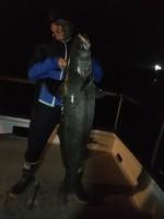 San Pedro 22nd Street Sportfishing  - Fortune - White Seabass