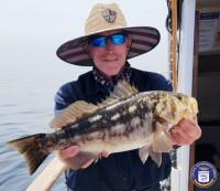 Channel Islands Sportfishing  - Cobra - Calico Bass
