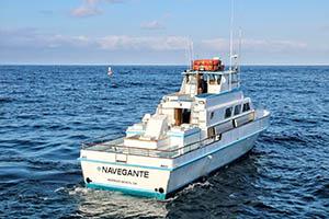 Navegante Sportfishing